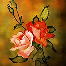 Rose,,,,,Rose.......!!!!!! by andy551
