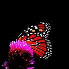 Colourful hiding. by Paul Rees-Jones