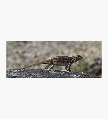 Sagebrush Lizard at Yosemite National Park Photographic Print