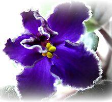 African Violet by Brenda Boisvert