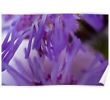 Purple Flower Macro  Poster