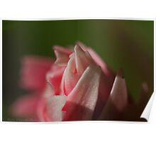 Flower Head Macro Poster