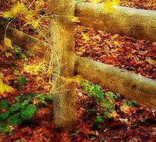 Autumn Hues ©  by Dawn M. Becker