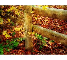Autumn Hues ©  Photographic Print