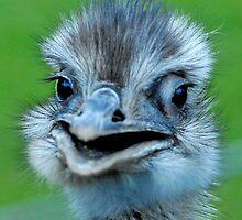 Emu by evelynlarner