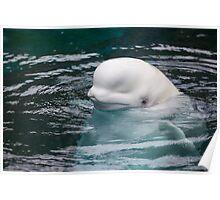 The Beluga Poster