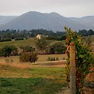 Yarra Valley by Sarah Howarth | Photography