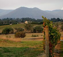 Yarra Valley by Sarah Howarth [ Photography ]