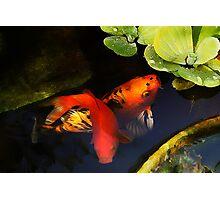 Koi in pond Photographic Print