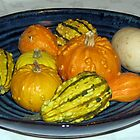 Harvest Bounty - Colourful Gourds by BlueMoonRose