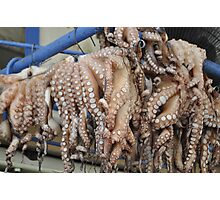 Octopi Photographic Print