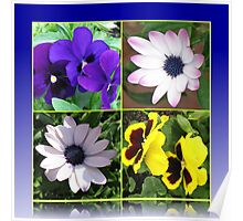 Pretty Pansies and Cute Cape Daisies Floral Collage Poster