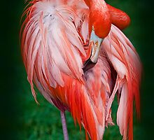 Pink Flamingo by vadim19