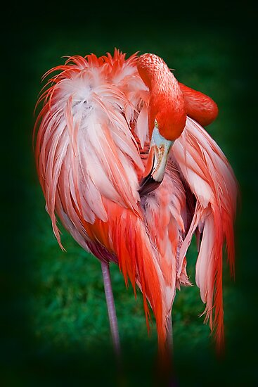Pink Flamingo by vadim19