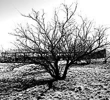 Dry by Tina Cacho