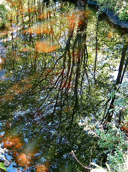 Reflections in the Stream II by David Davies