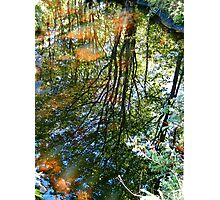 Reflections in the Stream II Photographic Print