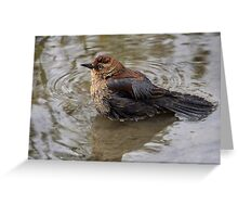 Uncommon / Rusty Blackbird Greeting Card