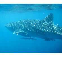 Whale Shark Leaving  Photographic Print