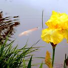 Weeping Iris and Slumbering Golden Fish by Brian Bo Mei