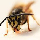 Jammy Wasp by bared