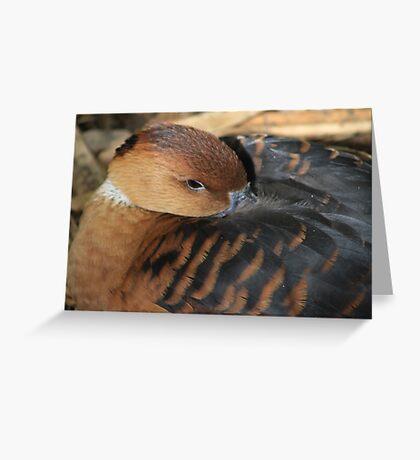 Feeling Ducky Greeting Card
