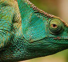 karma chameleon? by mellychan