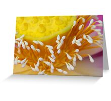 Lotus Flower II Greeting Card