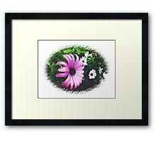 Large, beautiful Purple Daisy Framed Print