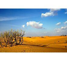 Scrub in the Desert - Landscape Photographic Print