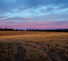 Wheat by Angela Lisman-Photography
