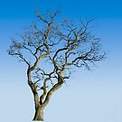 Wire Tree by James Zickmantel