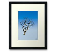 Wire Tree Framed Print