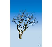Wire Tree Photographic Print
