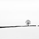 Simplicity of Snow by Squance
