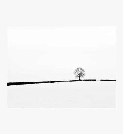 Simplicity of Snow Photographic Print