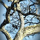 Crow Haven by James Zickmantel