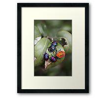Bug Meeting Framed Print