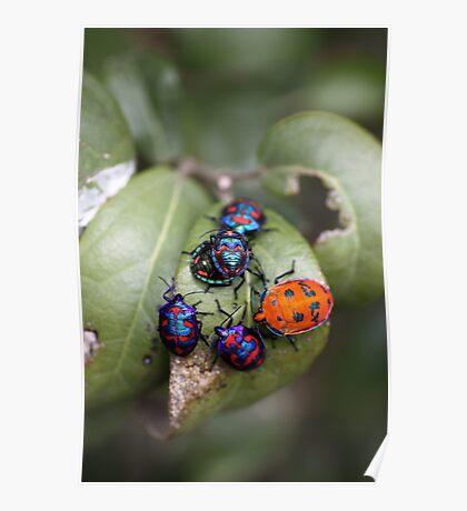 Bug Meeting Poster