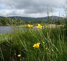 Buttercups by Paul Bettison