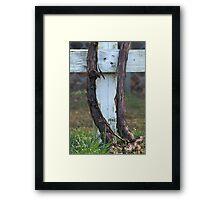 Heavenly Vineyard Framed Print