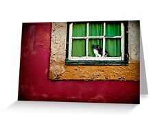 Cat in Lisbon Greeting Card