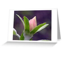 Spring Offering Greeting Card