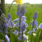 Bluebells by Veterisflamme