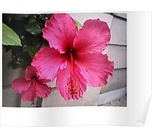 Newport wild flower Poster
