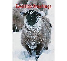 Eweltide Greetings Photographic Print