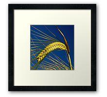 Barley Framed Print