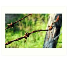 Rusty Barbed Wire Fence Art Print
