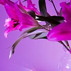 Pretty In Pink And Purple by Jayne Le Mee