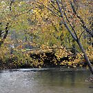 Along Pikes Creek In Autumn by kkphoto1